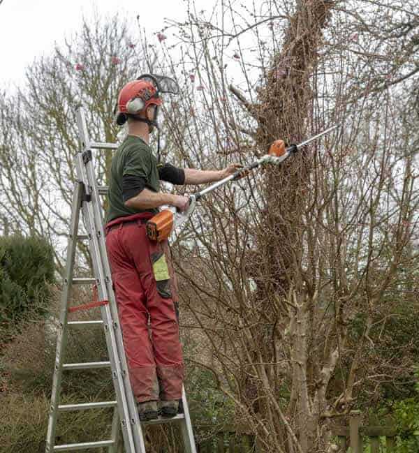 Trees being trimmed by North London Tree Surgeon