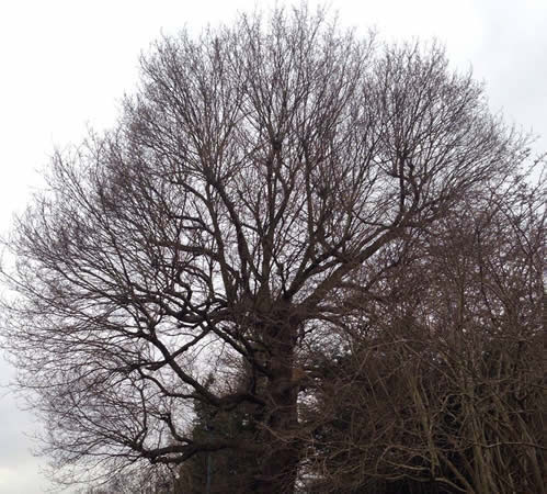Tree Surgery Hemel Hempstead