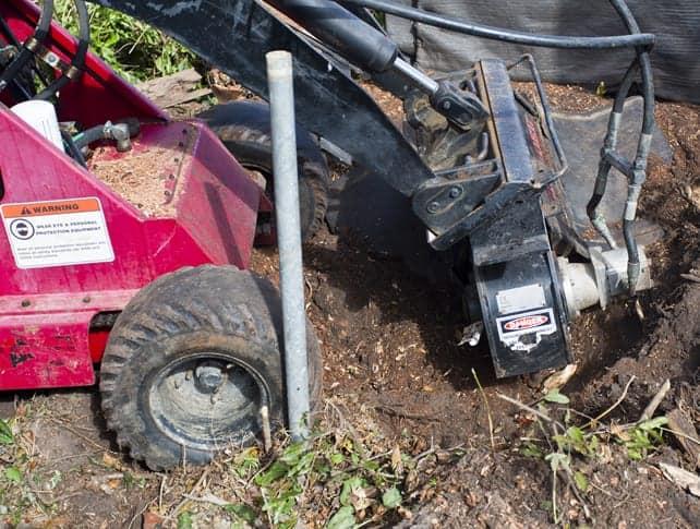 Tree Surgeons Hemel Hempstead Grinding Tree Stump