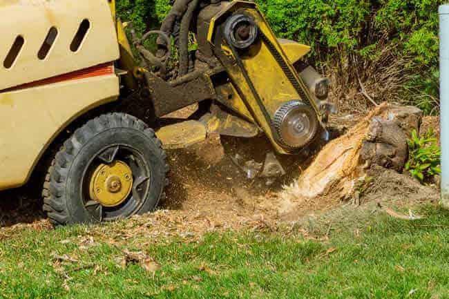 Stump Grinding Service Barnet