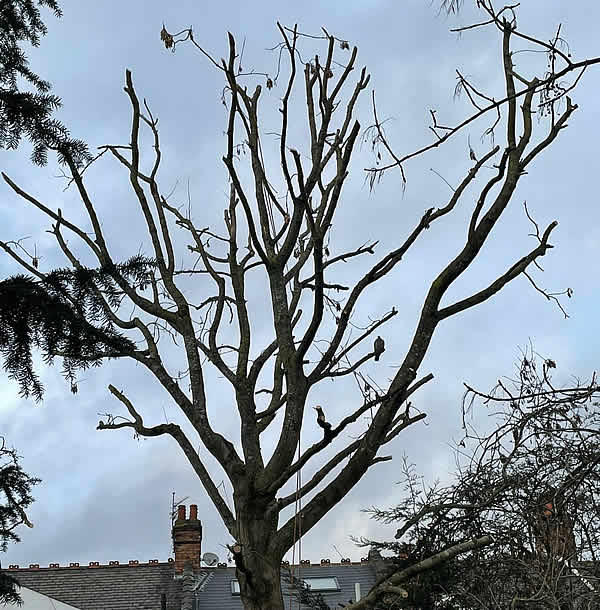 Tree Care Barnet