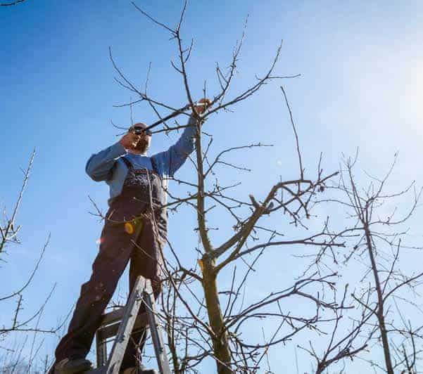 Tree Services Wembley