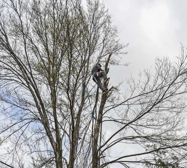 Local Tree Surgeon Wembley