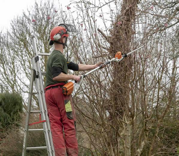Tree Surgery in Barnet