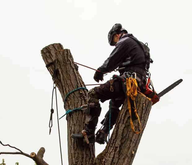 Tree Surgery Wembley