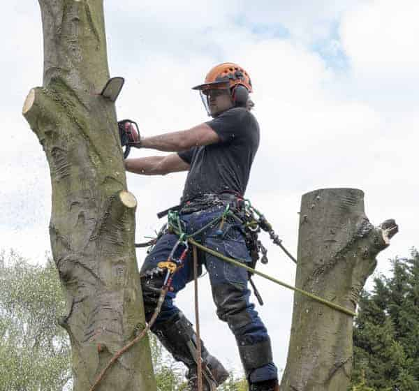 Local Tree Work Stevenage by A1 Town and Country