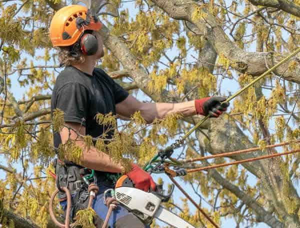 Local Tree Surgery Stevenage