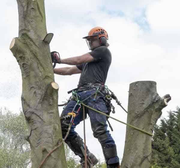 Tree Work by Tree Surgeon in Hertfordshire